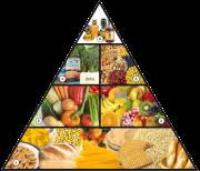 piramide_alimentacion_vegana11-1_03