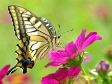 linda-mariposa-hd-1770